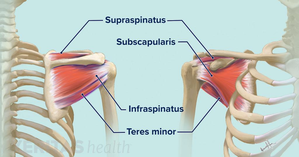 Mišići rotatorne manžetne